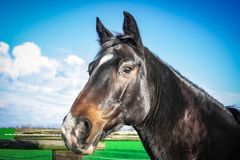 Horse, Halter, Bridle, Fauna Stock Images