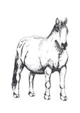 Horse, hand drawing Royalty Free Stock Images