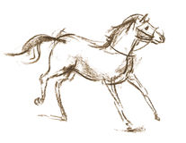 Horse. Hand-drawn Royalty Free Stock Image