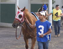 Horse And Handler At Racetrack Stock Photo