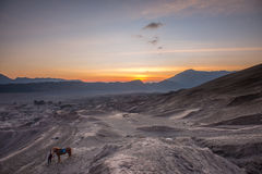 Horse and Handler at Sunrise in the desert Royalty Free Stock Image