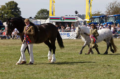 Horse handlers being judged Royalty Free Stock Images