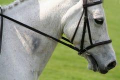 Horse in harmony Stock Image