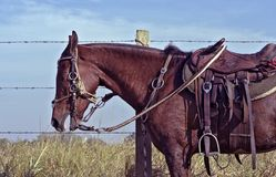Horse harness with apparatuses of Sao Paulo state. Horse harness, with saddle and the apparatuses typical of the countryside of Sao Paulo state, Brazil royalty free stock image