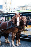 The horse in harness. A beautiful brown horse in harness in the street in a city close up. / The horse in harness Stock Photography