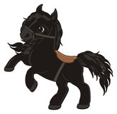 Horse and harness. Black little horse stand with brown harness and watch Royalty Free Stock Images
