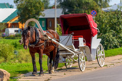 Horse in harness with a cart summer day Stock Images
