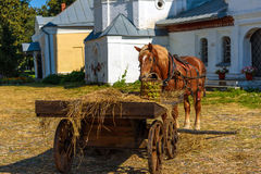 Horse in harness with a cart summer Stock Photography