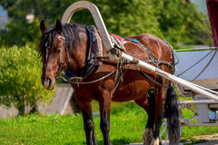 Horse in harness with a cart. Summer sunny day Royalty Free Stock Photos