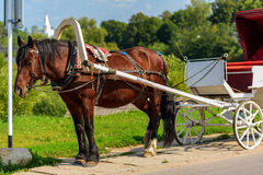 Horse in harness with a cart. Summer sunny day Stock Photo