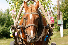 Horse in harness Royalty Free Stock Photos