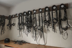 Horse harness Royalty Free Stock Photos