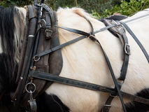 Horse Harness Royalty Free Stock Image