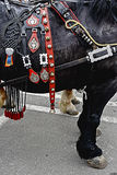 Horse with harness of decorations Stock Images
