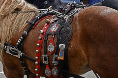 Horse with harness of decorations 1 Royalty Free Stock Photo