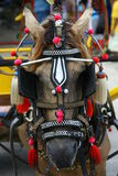 Horse harness. In Gili island Indonesia Stock Photo