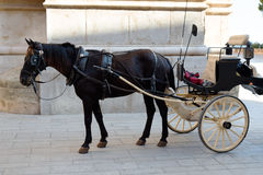 Horse in harness. Near the wall Stock Photography