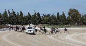 Horse harness race autostart Stock Photos