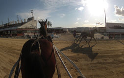 Horse harness race 042. First person cam when riders prepare before their race during a horse harness race in Palma de Mallorca´s hippodrome Stock Photos