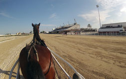 Horse harness race 066. First person cam when riders prepare before their race during a horse harness race in Palma de Mallorca´s hippodrome Royalty Free Stock Images