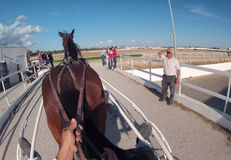 Horse harness before race Stock Photography