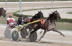 Horse harness race 051 Royalty Free Stock Photos
