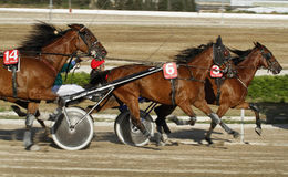 Horse harness race 017. Riders compete close during a horse harness race in Palma de Mallorca´s hippodrome Stock Photos