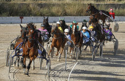 Horse harness race 024 Stock Images