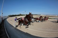 Horse harness race starting in mallorca hippodrome. Riders compete during a horse harness race or sulky racing in Palma de Mallorca´s hippodrome Stock Image