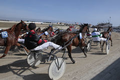 Horse harness race wide Stock Image
