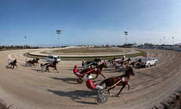 Horse harness race wide view Royalty Free Stock Photography
