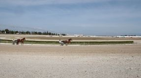 Horse harness race wide view. Riders compete during a horse harness race in Palma de Mallorca´s hippodrome Stock Images