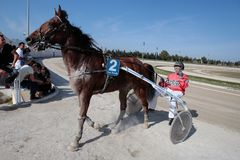 Horse harness racer in mallorca hippodrome. A rider drives back to stables after compete during a horse harness race or sulky racing in Palma de Mallorca´s Stock Photos