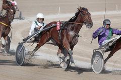 Horse harness racing Stock Photography
