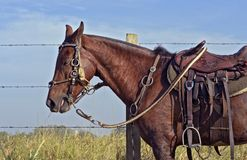 Horse harness with apparatuses of Sao Paulo state. Horse harness, with saddle and the apparatuses typical of the countryside of Sao Paulo state, Brazil stock photos