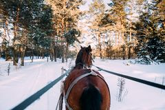 A horse in a harness in the sunlight on the snow. In the woods Stock Images