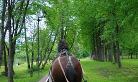 Horse in the harness. View from behind, focus away Royalty Free Stock Images
