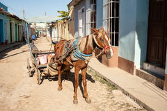 Horse with harness wagon Stock Photography