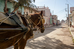 Horse with harness wagon Royalty Free Stock Photos