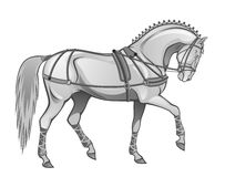 Horse in harness. On a white background Stock Photography
