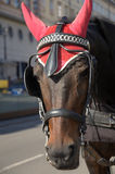 Horse. Harnessed carriage horse in Vienna Stock Photo