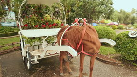 A horse harnessed in a cart of flowers in a park of flowers. Dalat, Vietnam stock video