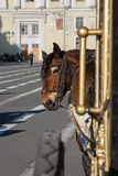 A horse harnessed to a carriage Stock Images