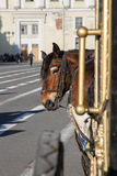 Horse harnessed to a carriage Royalty Free Stock Photos