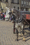 A horse harnessed to a cart Royalty Free Stock Image