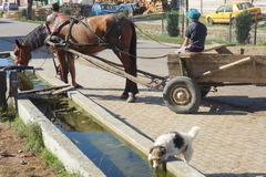 Horse harnessed to cart and little dog drinking water from a trough in village. Scene in Turnu Rosu village in Romania Stock Image