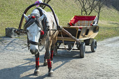 Horse harnessed to a cart Stock Image
