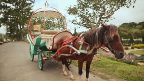 A horse harnessed to a cart in a park of flowers. Dalat, Vietnam stock footage