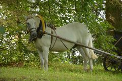 Horse harnessed to cart stock photo