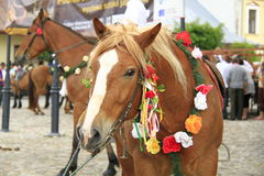 Horse. Harnessed to feast in Poland Royalty Free Stock Image